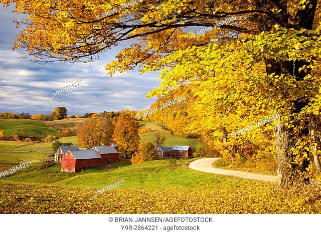 Orange and Yellow Maple Trees at dawn over the Jenne Farm near Woodstock, Vermont, USA