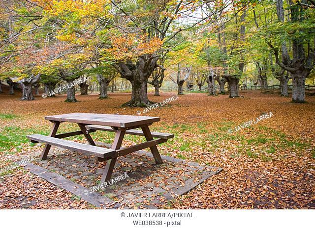 Beechwood, Gorbea Natural Park. Álava-Biscay, Euskadi, Spain