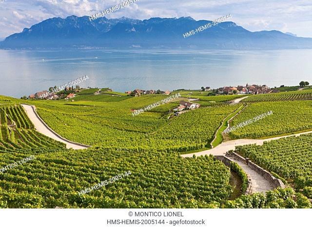 Switzerland, Canton of Vaud, Lavaux Vineyard Terraces listed as World Heritage by UNESCO, it extends from Montreux to Lausanne on 32km along Lake Geneva and...