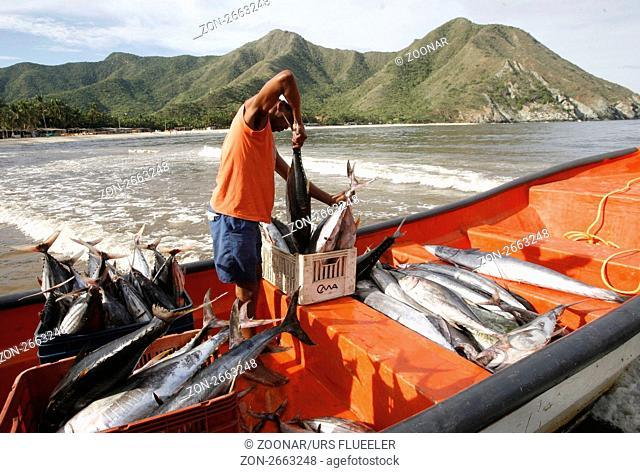 Suedamerika, Karibik, Venezuela, Nord, Chuao, National Park Hanri Pittier, Dorf, Cacao Dorf, Kakao Dorf, Beach, Strand, Boot, Taxiboot, Fisch Transport, Fischer