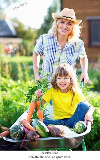 Child holds carrots in wheelbarrow with fresh vegetables in the garden. Mother is carrying her daughter in cart