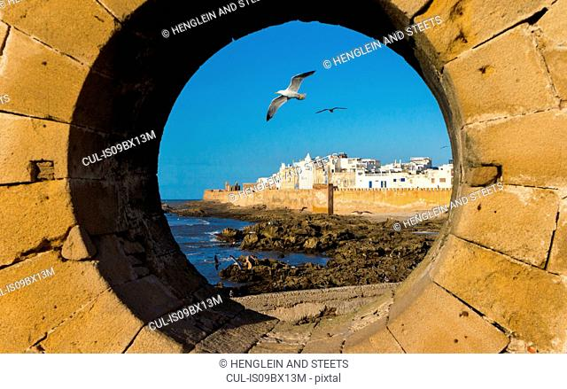 Gulls seen through port hole, Essaouira, Morocco