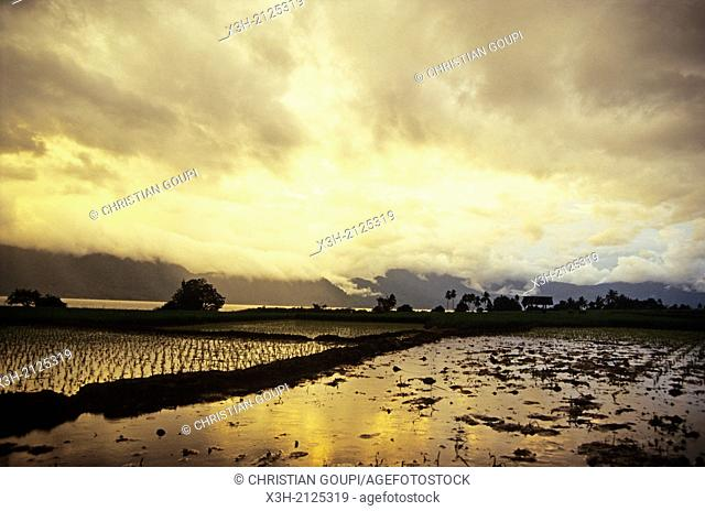 paddy field at sunset, Sumatra island, Republic of Indonesia, Southeast Asia and Oceania