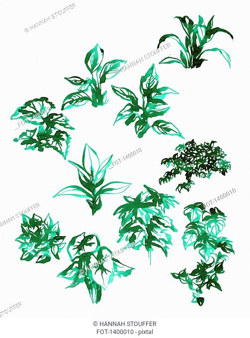 Illustration of various plants on white background