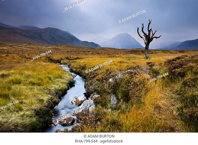 Dead tree and stream on moorland wilderness of Rannoch Moor, Highlands, Scotland, United Kingdom, Europe