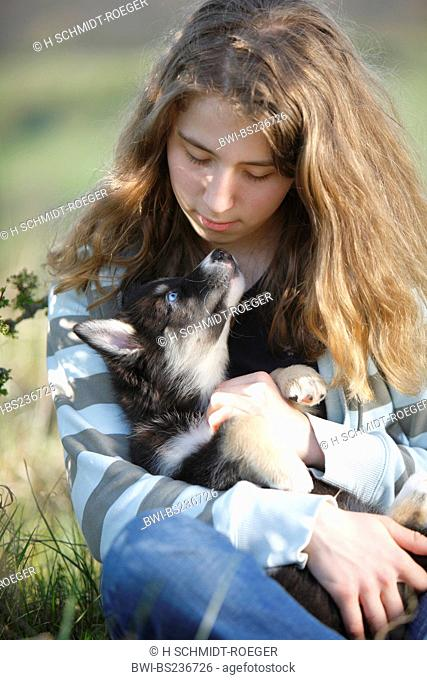 domestic dog Canis lupus f. familiaris, girl sitting in a meadow holding the mixed breed of a Husky and an Australian-Shepherd in her arms