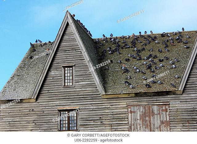 Pigeons roosting on the roof of an old building