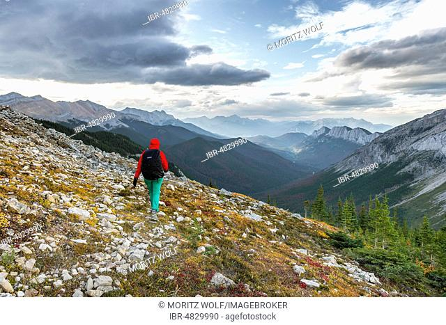 Female hiker on a hiking trail, Sulphur Skyline trail, Ashlar Range, Jasper National Park, British Columbia, Canada