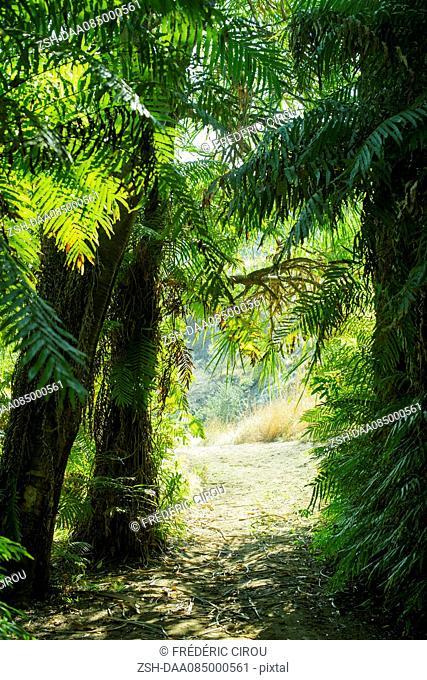 Path through tropical trees