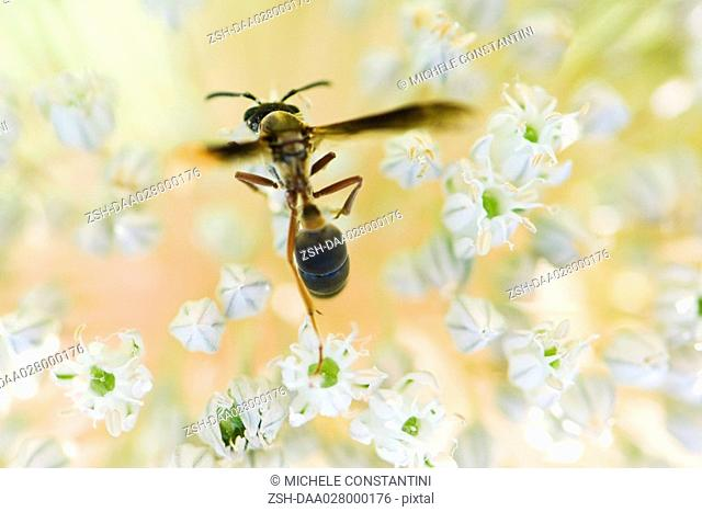 Wasp landing on flower blossom
