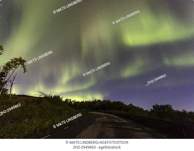 Northern Light, Aurora borealis over Björkliden in Kiruna County with a road in foreground and yellow birch trees, Swedish Lapland, Sweden
