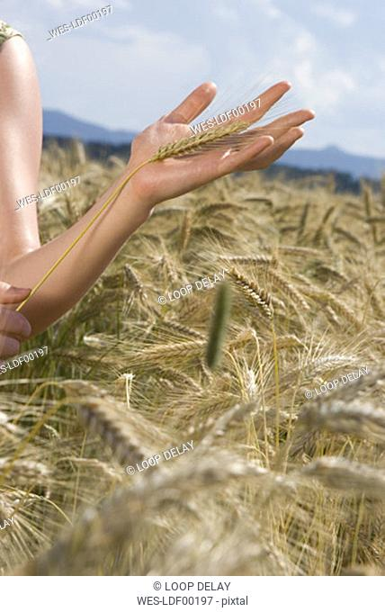 Young woman in cornfield, holding cornstalk, close-up