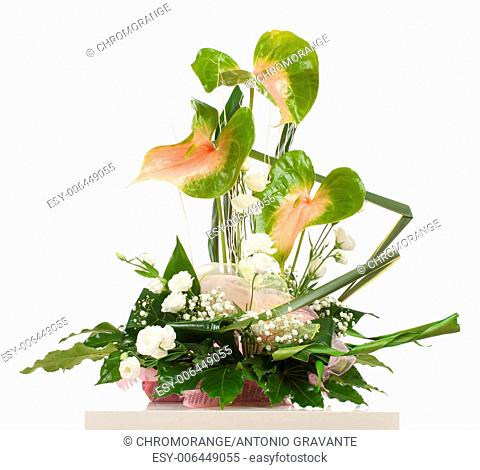 Basket of Anthurium essencia on white background