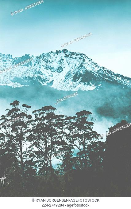 Blue toned image of a snow tipped Mount Gell, Franklin-Gordon Wild Rivers National Park, in central Tasmania, Australia with the silhouette of gum trees in the...