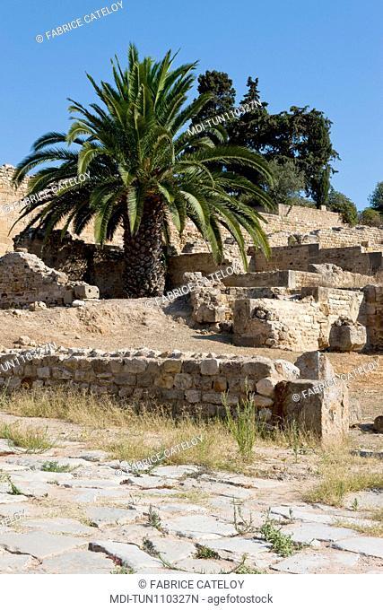 Tunisia - Carthage - The Roman houses