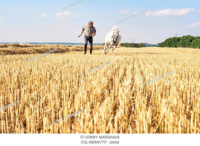 Man training galloping white horse in field