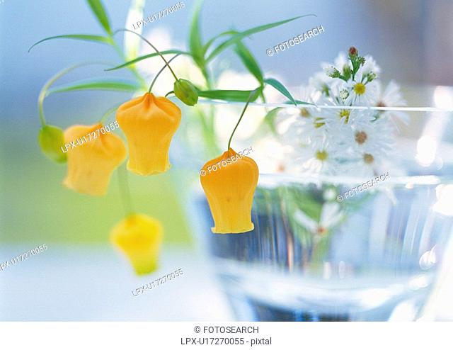 Orange and White Flowers in Glass, Close Up, Differential Focus, In Focus, Out Focus