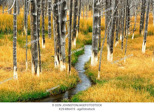 Wetlands with grasses, dead tree snags and stream
