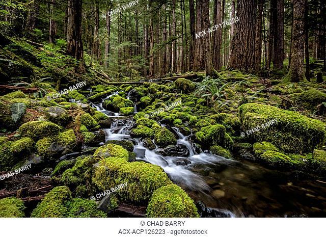 Sol Duc Trail - Olympic National Park, Washington, United States