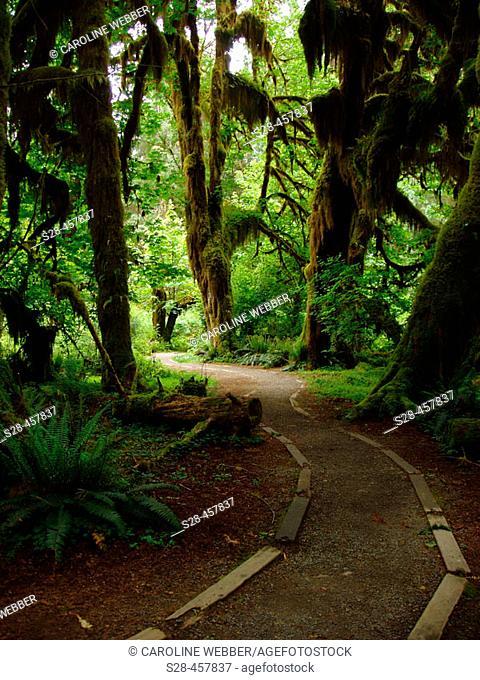 Path through Hoh rainforest, Olympic Peninsula, Washington, USA
