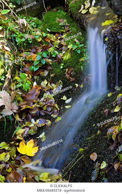 A little waterfall in the wood, surrounded by leaves in autumn. Lombardy Italy Europe