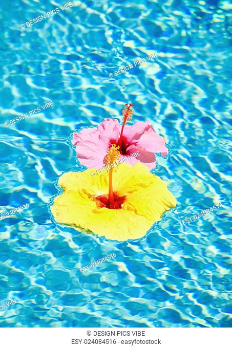 Colorful Flower Floating in Pool