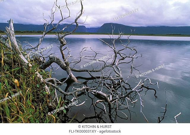 Boreal Forest  Black spruce & rushes  Western Brook Pond  Gros Morne National Park, Newfoundland