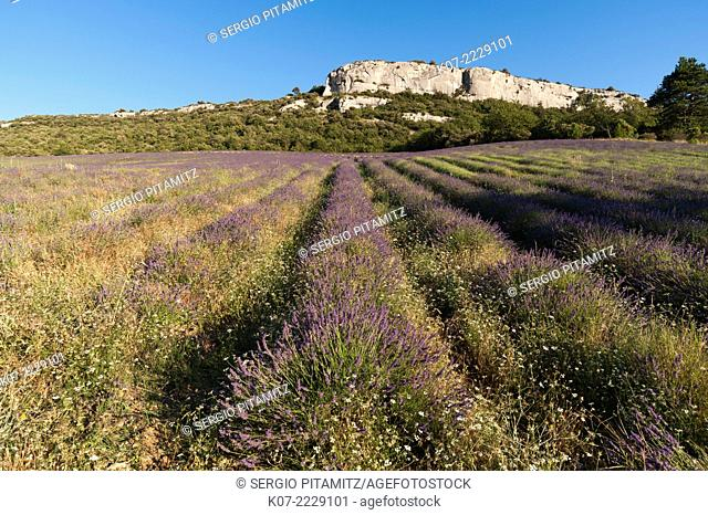 Croagnes, Provence, France