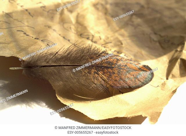 Bird's feather lies on old writing paper