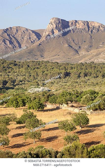 Countryside of Arta and mountains, Majorca