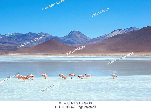 Laguna Blanca, Eduardo Abaroa Reserves National of Andean Fauna, Lipez Desert, Department of Potosi, Sud Lipez Province, La Paz, Bolívia