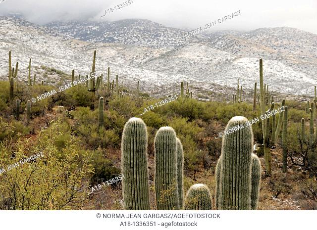 Snow covers the Rincon Valley, in Vail, Arizona, Sonoran Desert, USA
