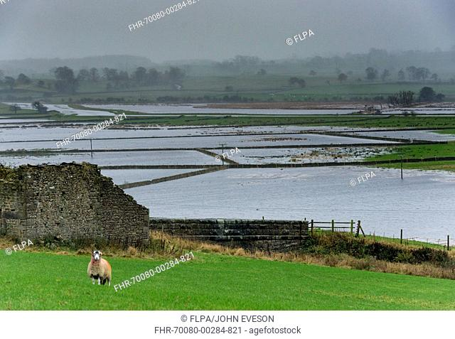 Flooded pasture in farmland, near Skipton, North Yorkshire, England, November