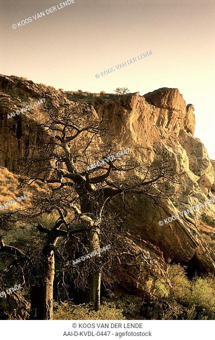 Boulders and baobab, Kingdom of Mapungubwe, Limpopo, South Africa. Art
