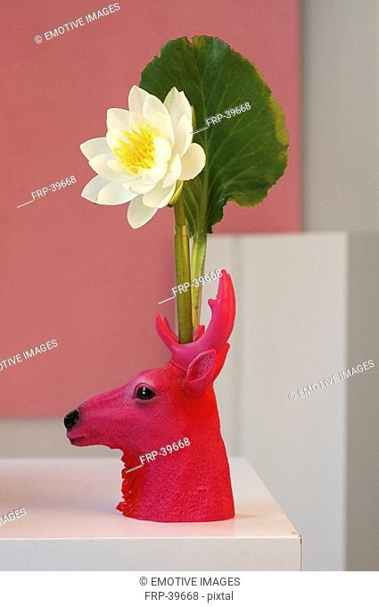 White water lily in pink coloured deer-shaped vase