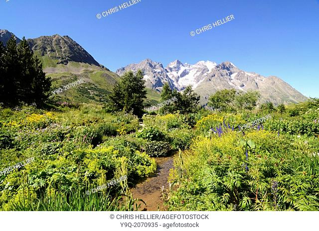Massif de la Meije & Alpine Garden at Col de Lautaret Mountain Pass Hautes-Alpes France