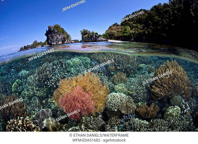 Reef Top rich of species, Misool, West Papua, Indonesia