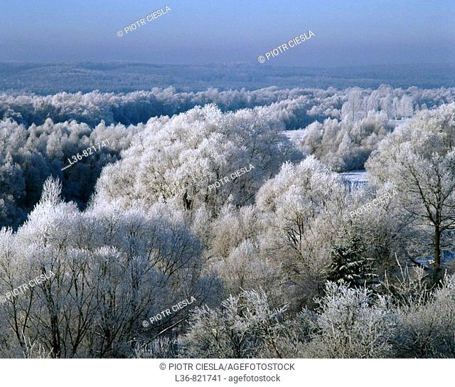 Trees covered with whitefrost in Podlasie, Eastern Poland