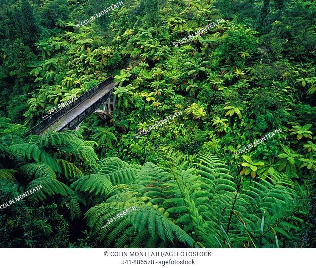 Bridge to Nowhere Whanganui National Park New Zealand