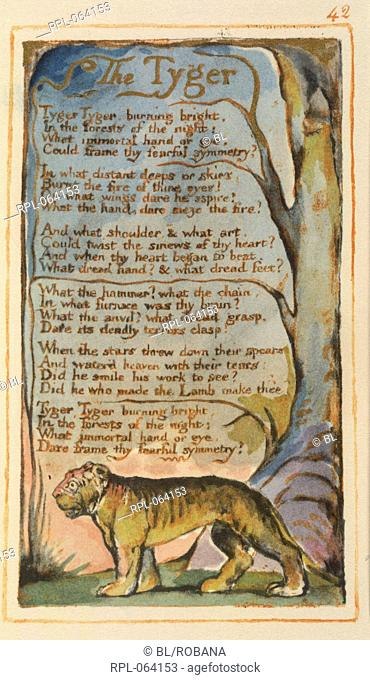 The Tyger. A poem. Image taken from Songs of Innocence and of Experience. A facsimile of a colouredand gilded copy of the first edition