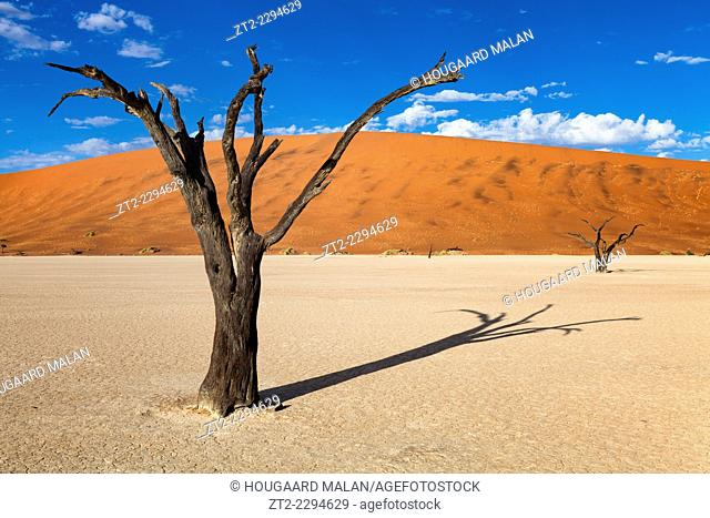 Landscape photo of the dead trees of Deadvlei on a cloudy summer morning. Deadvlei, Namib Naukluft National Park, Namibia