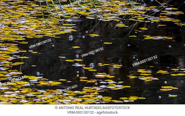 Rain in a pond in autumn. Almansa. Albacete province. Spain