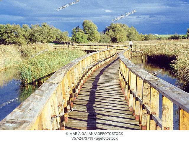 Wooden footbridge. Tablas de Daimiel National Park, Ciudad Real province, Castilla La Mancha, Spain