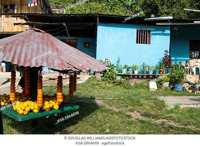 Oranges for sale by the road and in a yard of a house near San Agustin, Colombia, South America