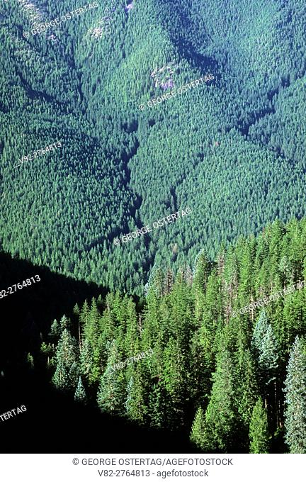 Eagle Creek drainage from Old Baldy Trail, Salmon-Huckleberry Wilderness, Mt Hood National Forest, Oregon