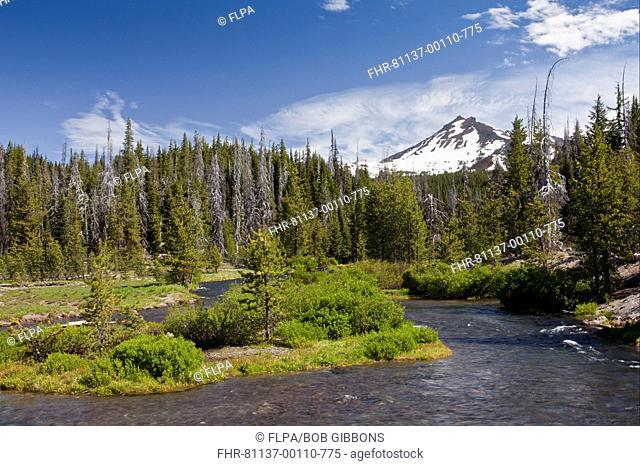 View of river entering lake, Green Lake Trail, Fall Creek, Sparks Lake, Cascade Mountains, Oregon, U S A , july
