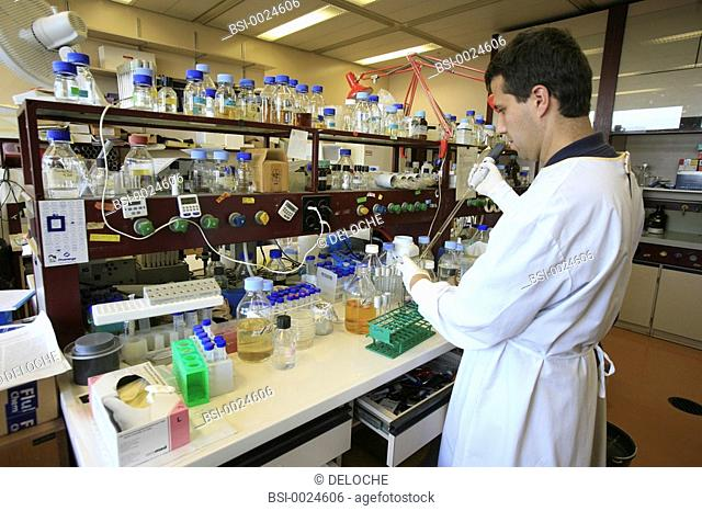 BIOLOGY LABORATORY<BR>Photo essay from laboratory.<BR>Laboratory of cellular microbiology at the University medical centre of Geneva (Switzerland)