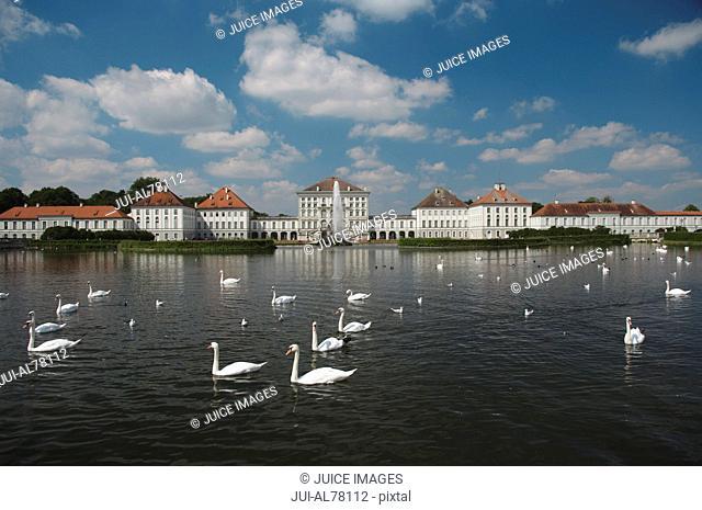 Swans in water in Germany