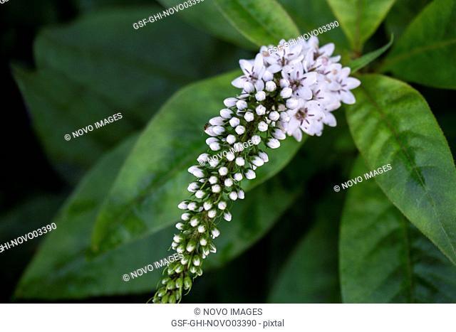 Flower Buds Blooming