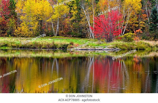 Autumn colour in a birch, aspen, maple mixed hardwood woodland reflected in St. Pothier Lake, Greater Sudbury Walden, Ontario, Canada